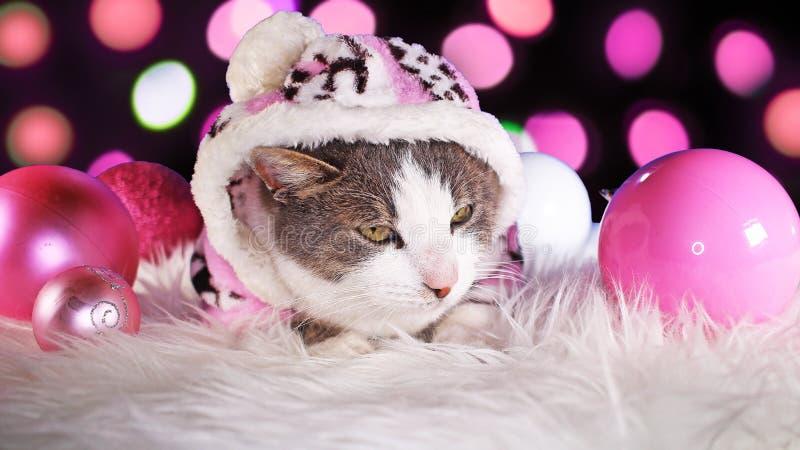 Dekor för djura för xmas för julkatt gullig rosa katter för djur royaltyfri bild
