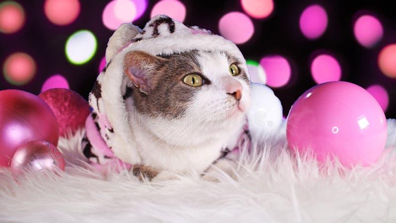 Dekor för djura för xmas för julkatt gullig rosa katter för djur royaltyfri foto