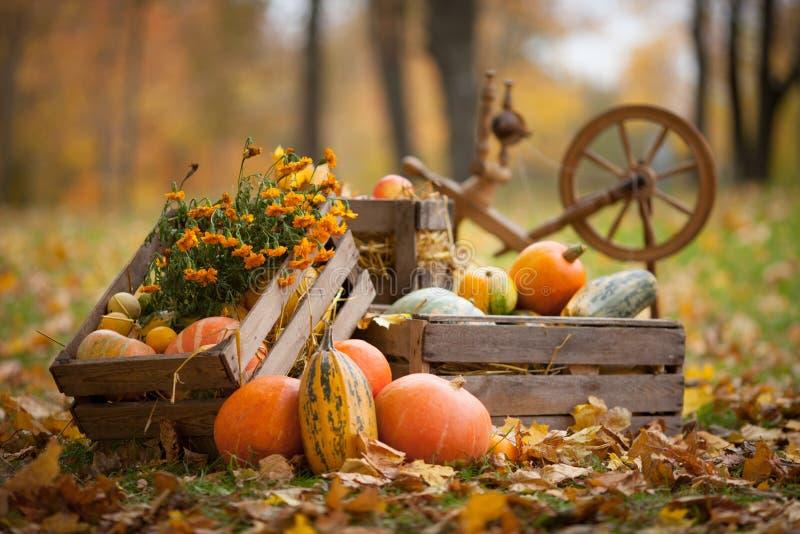 Dekoracja jesienna w ogrodzie Pompkini i warzywne leżące w drewnianym pudełku na jesiennym tle Czas jesienny Święto Dziękczynieni obrazy stock