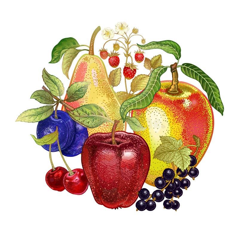 Dekoracja z realistycznymi owoc ilustracji