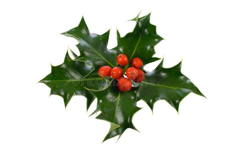 dekoracji świątecznej holly ostrokrzew zdjęcie royalty free
