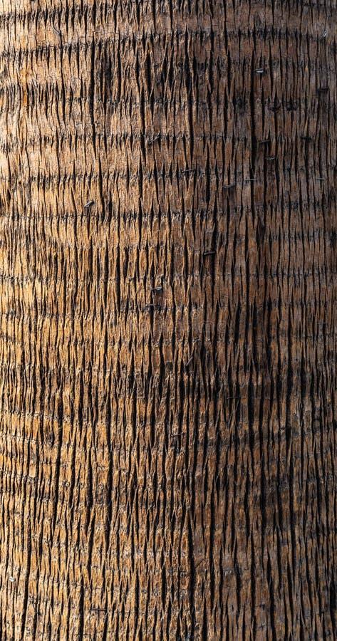 Dekoracyjna drzewko palmowe barkentyna jako tło zdjęcie royalty free