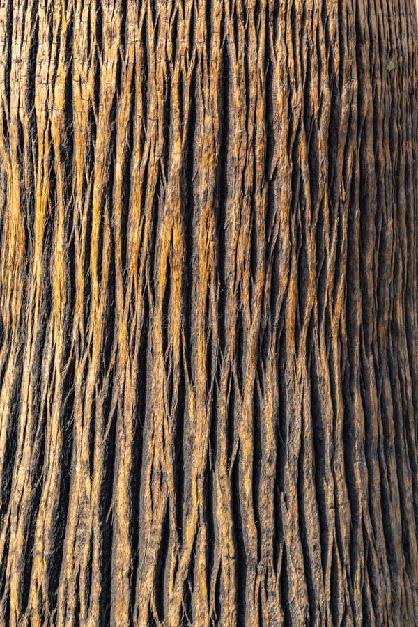 Dekoracyjna drzewko palmowe barkentyna jako tło fotografia royalty free