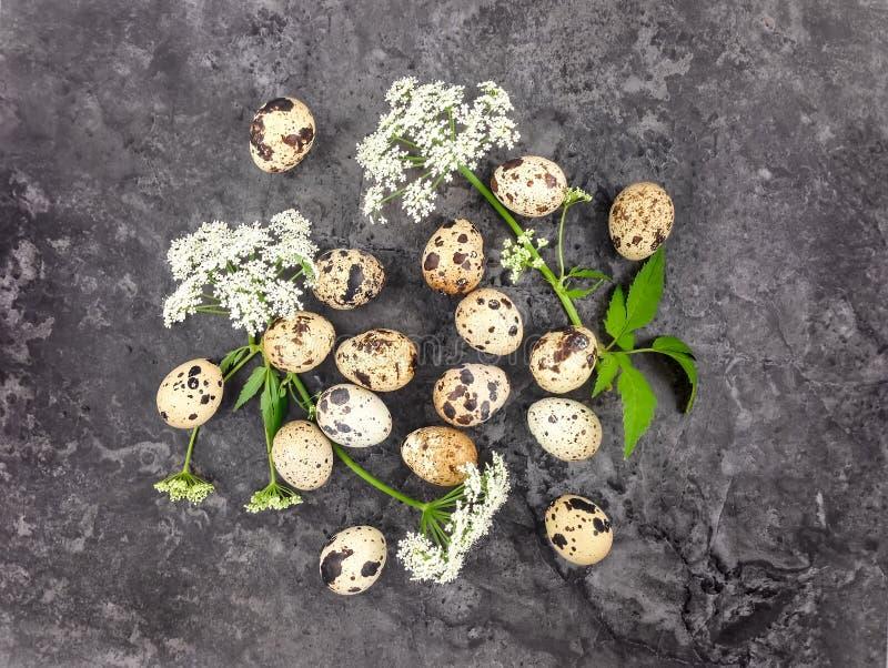 Dekoracyjna jaskrawa grupa przepiórek jajka z kwiatami na zmroku kamienia tle Mieszkanie nieatutowy obraz stock