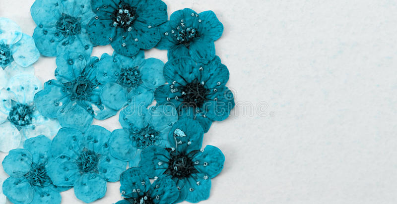 Download Dekoracyjna Montaż Kompilacja Kolorowa Wysuszona Wiosna Kwitnie Obraz Stock - Obraz złożonej z tło, kwiecisty: 41953249