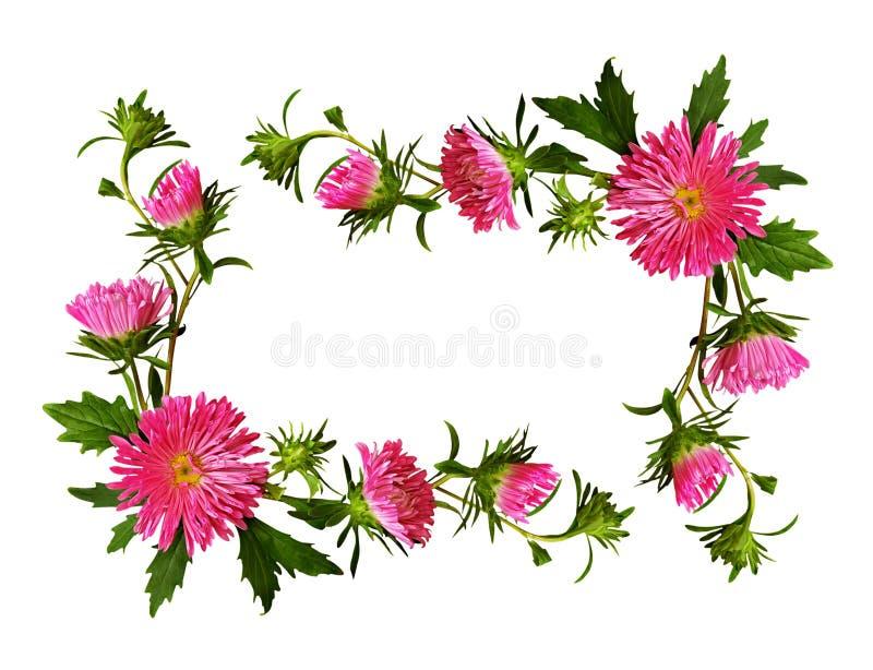 Dekoracyjna rama różowy aster kwitnie i pączkuje royalty ilustracja