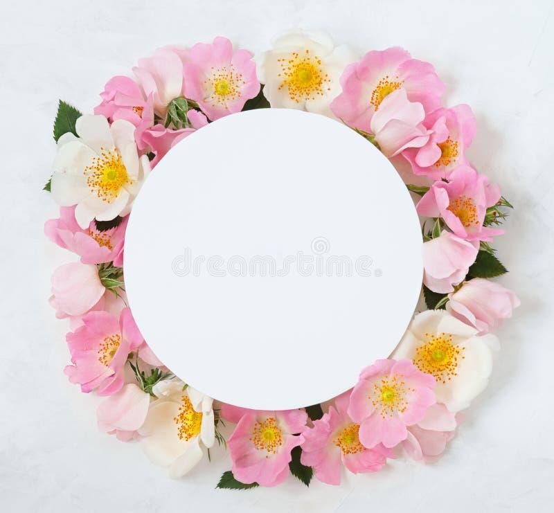Dekoracyjna rama z różowymi jaskrawymi różami i liśćmi na białym tle Mieszkanie nieatutowy obraz royalty free
