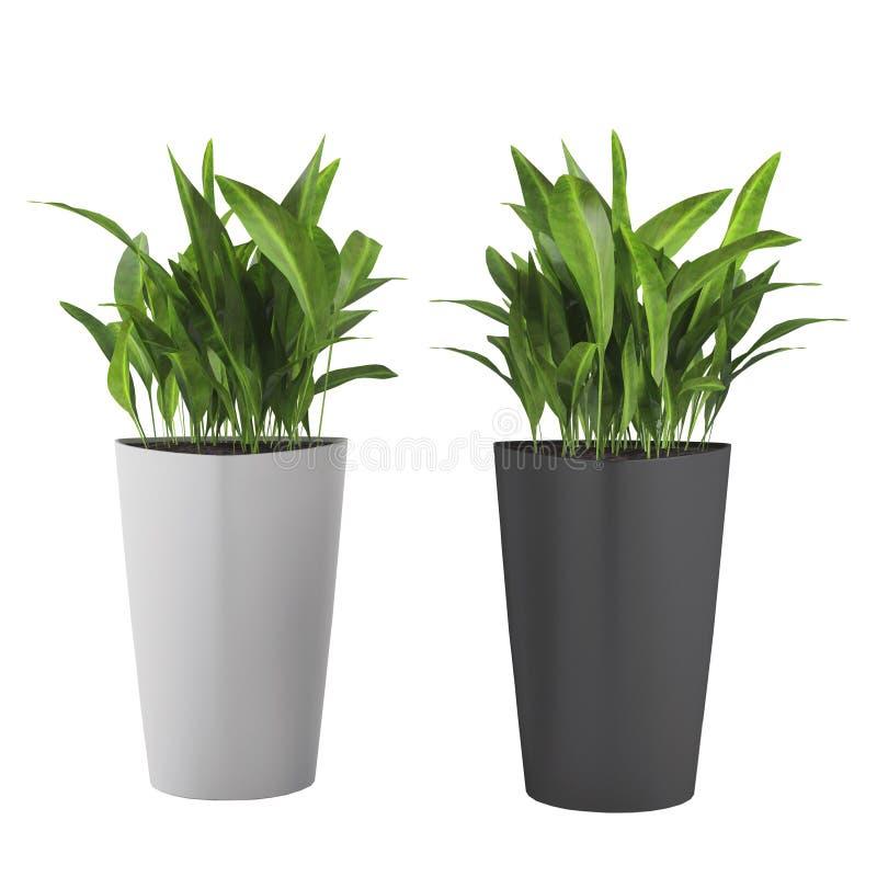 Dekoracyjna trawy roślina w flowerpot ilustracji