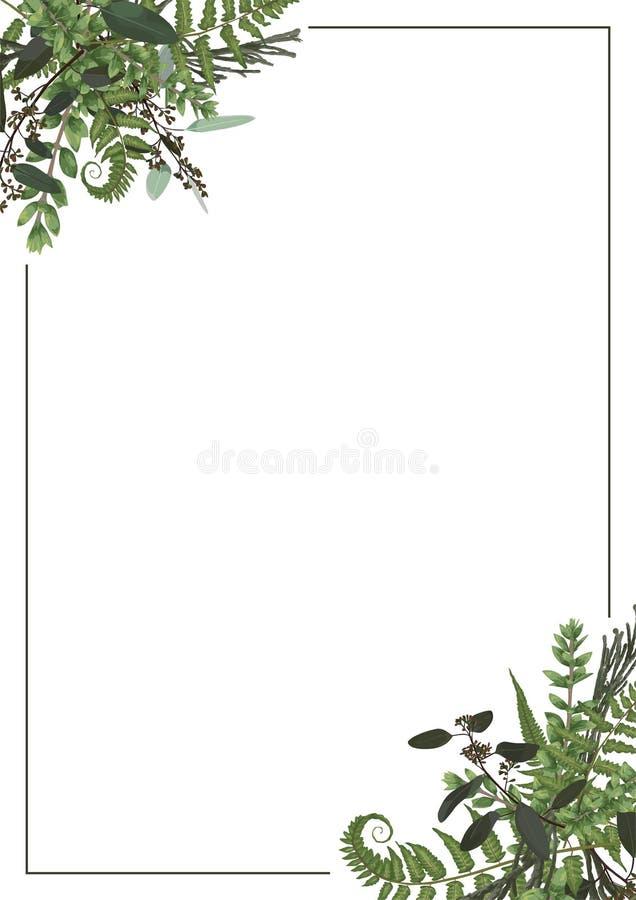 Dekoracyjna złota prostokątna rama z eukaliptusem, paprocią i boxwood, rozgałęzia się odosobnionego na bielu Dla ślubnych zaprosz ilustracja wektor