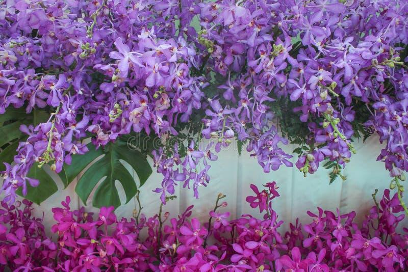 Dekoracyjni purpurowi orchidea kwiaty z zielonym paprociowym ornamentacyjnym i kolorowym kwiatostan menchii dendrobium deseniują  fotografia royalty free