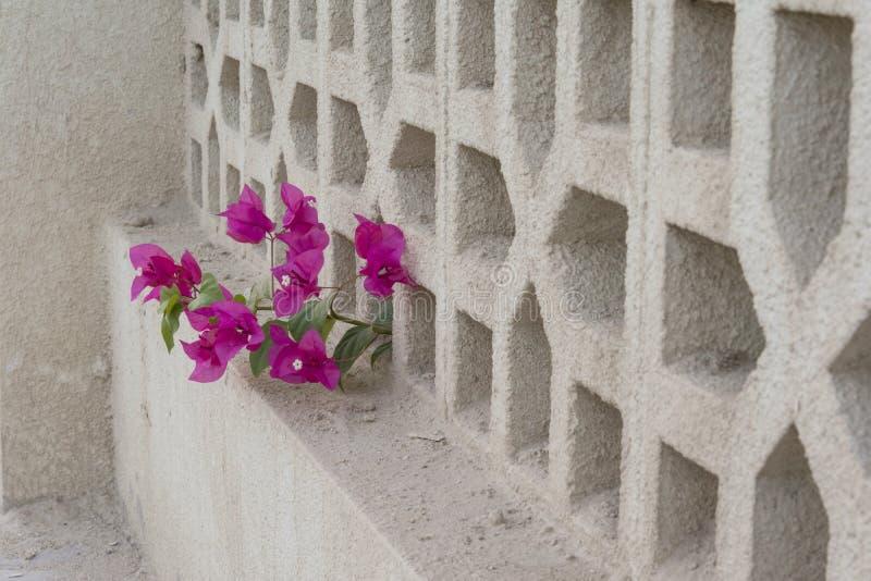 Dekoracyjny betonu ogrodzenie zdjęcia royalty free