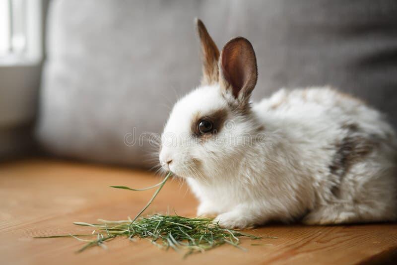 Dekoracyjny biały i czarny królik na drewnianym nadokiennym parapecie zdjęcie stock