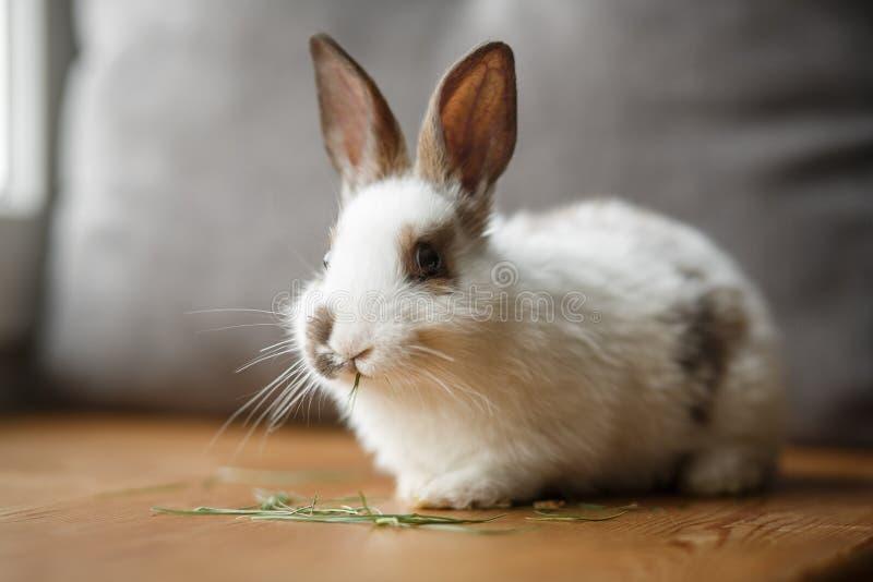 Dekoracyjny biały i czarny królik na drewnianym nadokiennym parapecie obrazy royalty free