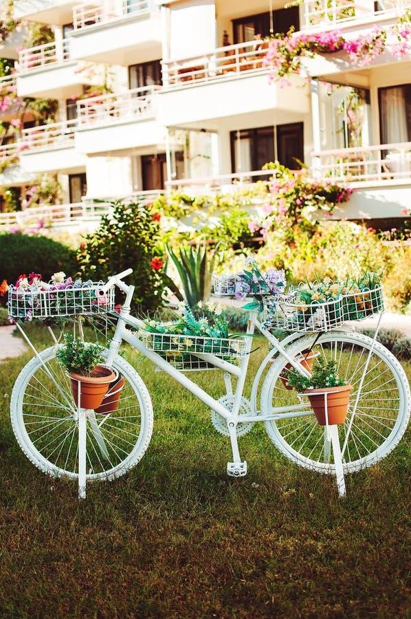 Dekoracyjny biały rower z kwiatów garnkami obraz royalty free