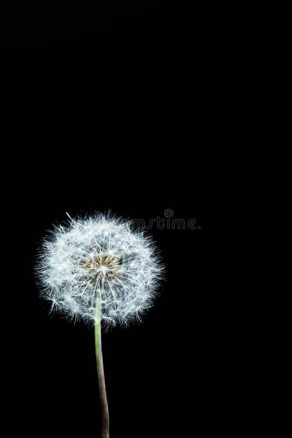 Dekoracyjny dandelion stół fotografia stock