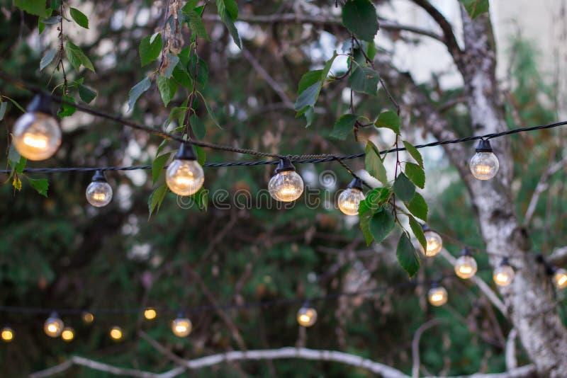 Dekoracyjny elektryczny feston oświetleniowe żarówki wiesza na drzewnym br obrazy stock