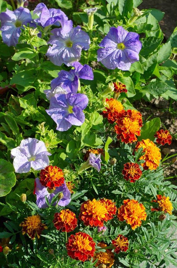 Dekoracyjny ogród kwitnie na flowerbed zdjęcia royalty free