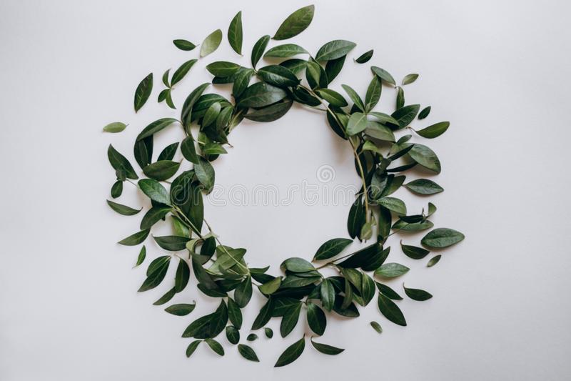Dekoracyjny okrąg zieleń opuszcza na białym tle zdjęcie royalty free