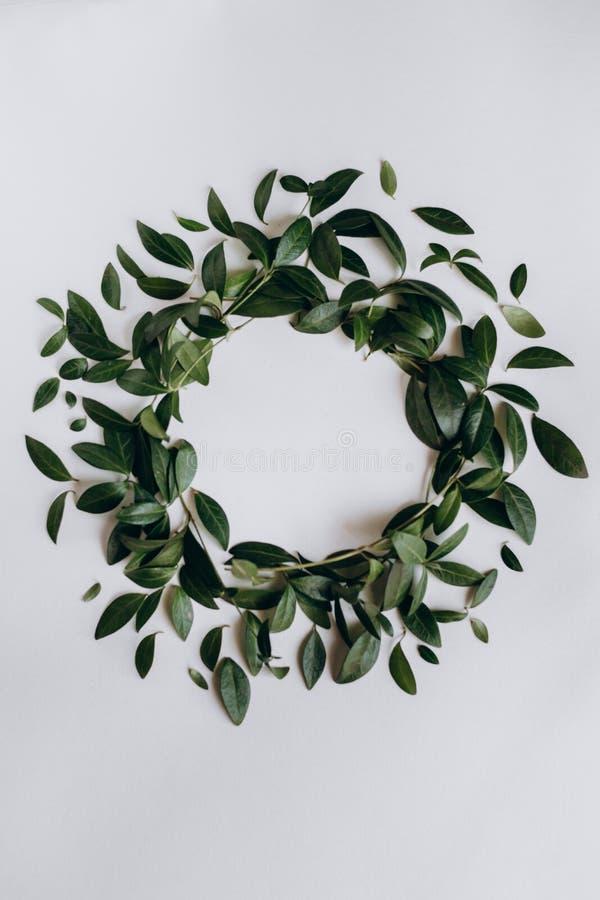 Dekoracyjny okrąg zieleń opuszcza na białym tle fotografia royalty free