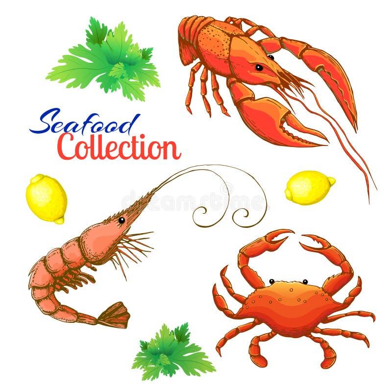 dekoracyjny owoce morza wektoru set realistyczna kreśląca krewetka, garnela, homar lub rakowy, i krab z cytryną i wiązką pietrusz royalty ilustracja