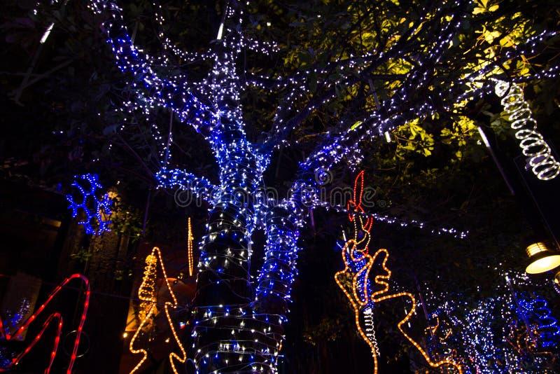 Dekoracyjny plenerowy sznurek zaświeca obwieszenie na drzewie w ogródzie przy nighttime zdjęcia royalty free
