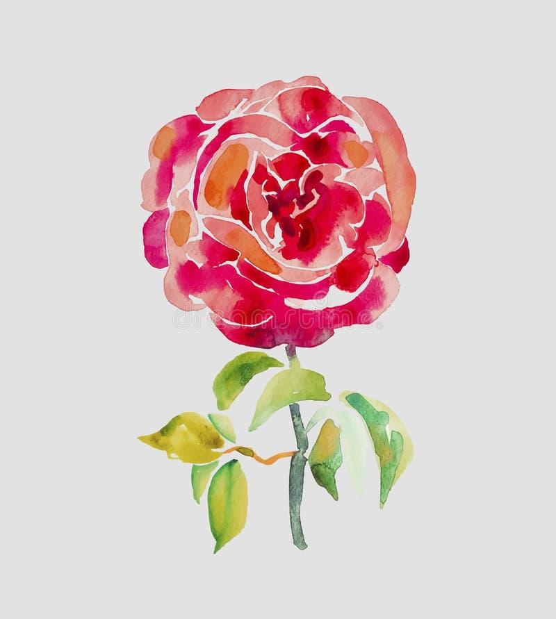 Dekoracyjny ręka obraz czerwieni róża ilustracji