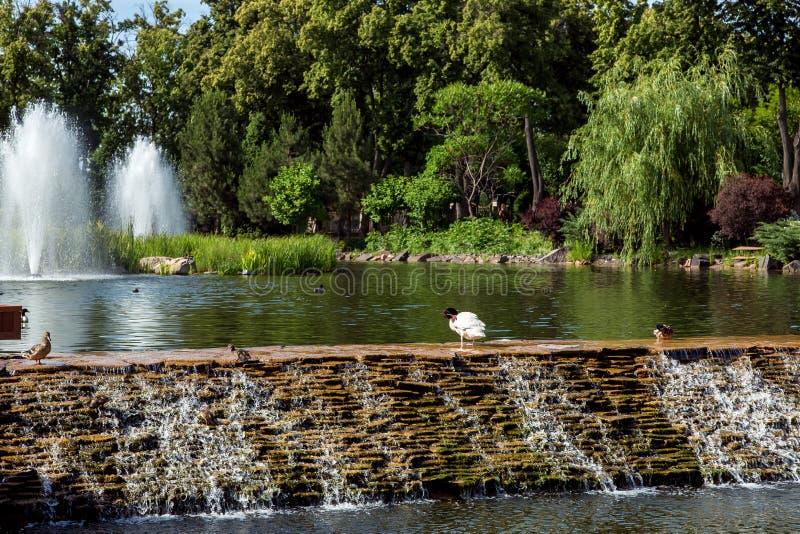 Dekoracyjny sztuczny staw z fontanną i spada kaskadą siklawą fotografia stock