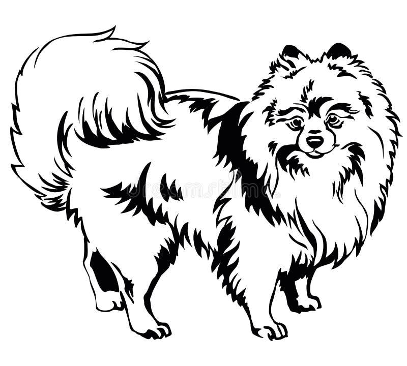 Dekoracyjny trwanie portret Psi Pomorski Spitz wektor il ilustracja wektor