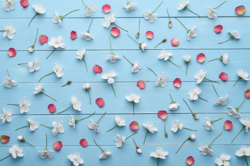 Dekoracyjny wzór biali wiśnia kwiaty i czerwoni płatki zdjęcia royalty free