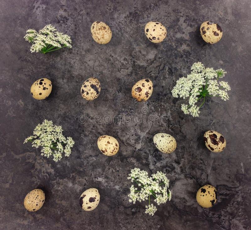 Dekoracyjny wzór z przepiórka kwiatami i jajkami na ciemnym tle Mieszkanie nieatutowy obraz stock