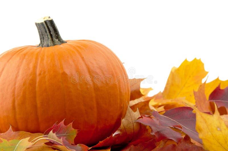 Dekoration des Kürbises mit Herbstlaub für Danksagungstag auf Weiß stockfotos