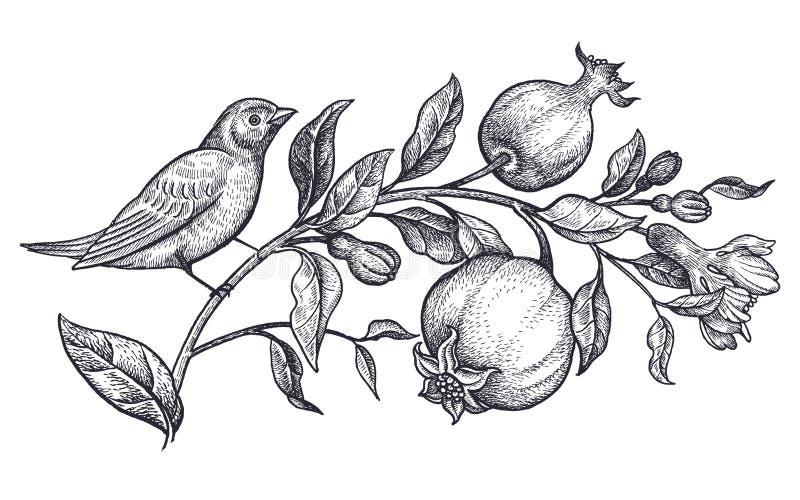 Dekoration mit Vogel und Blumen Realistische Handzeichnungsnachtigall und -niederlassung mit dem Granatapfel lokalisiert auf weiß lizenzfreie abbildung