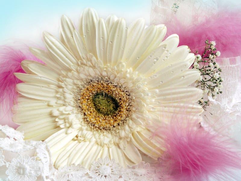 Dekoration mit weißem Gerbera stockfotografie
