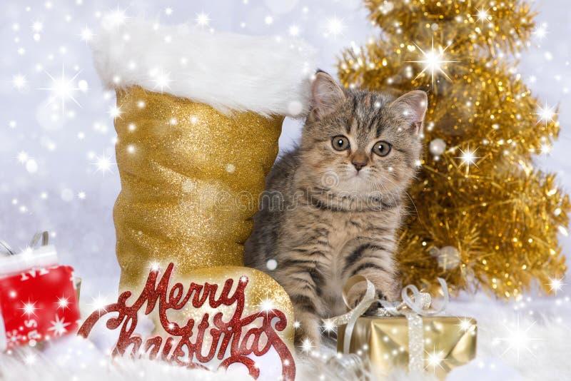 Dekoration wirh Kätzchen der getigerten Katze Weihnachts stockfoto