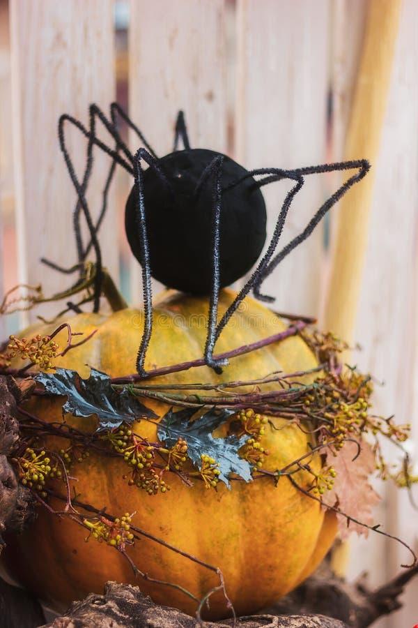 Dekorationen für Halloween Eine enorme Spinne sitzt auf einem Kürbis stockfotos