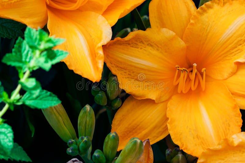 Dekorativ arbeta i trädgården exotisk tropisk blomma för orange blom för lilja oavkortad royaltyfri foto