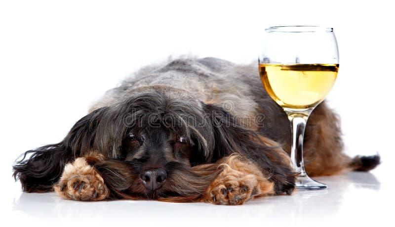 Dekorativ hund med ett vinexponeringsglas royaltyfria foton