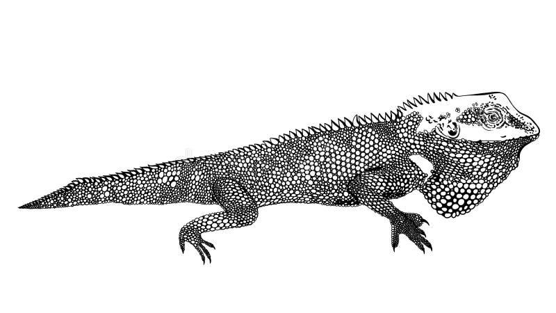 Dekorativ inspirerad kameleontkonstverkzentangle, lappar och klistermärkear Tropiska ödla- och monsterasidor stock illustrationer