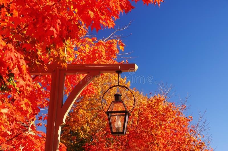 Dekorativ lykta med brand och röda mycket ljusa färgrika höstlönnträd fotografering för bildbyråer