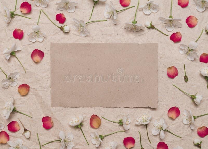 Dekorativ ram av vita körsbärblommor och röda kronblad arkivbild