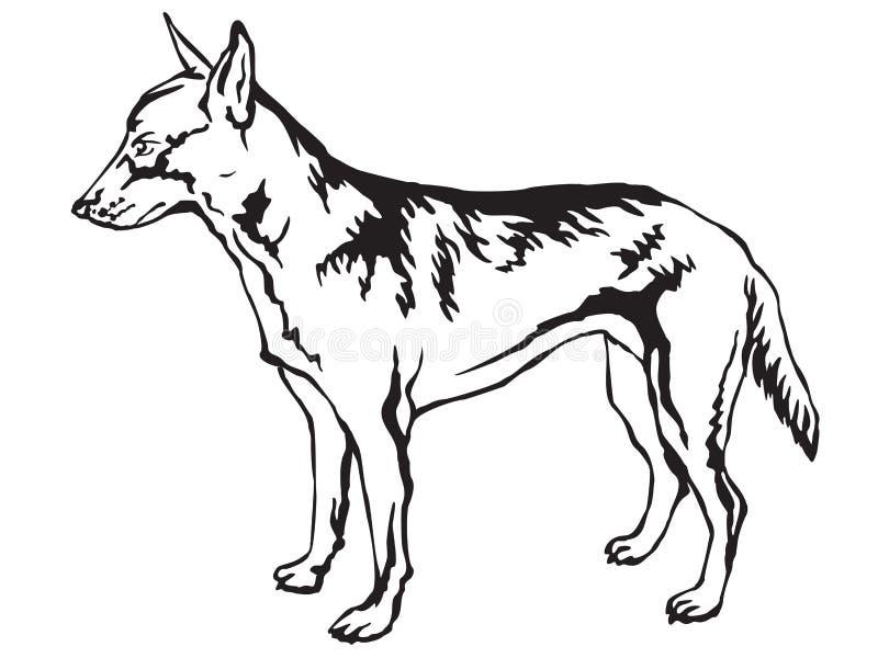 Dekorativ stående stående av den belgiska herdeMalinois vektorn stock illustrationer