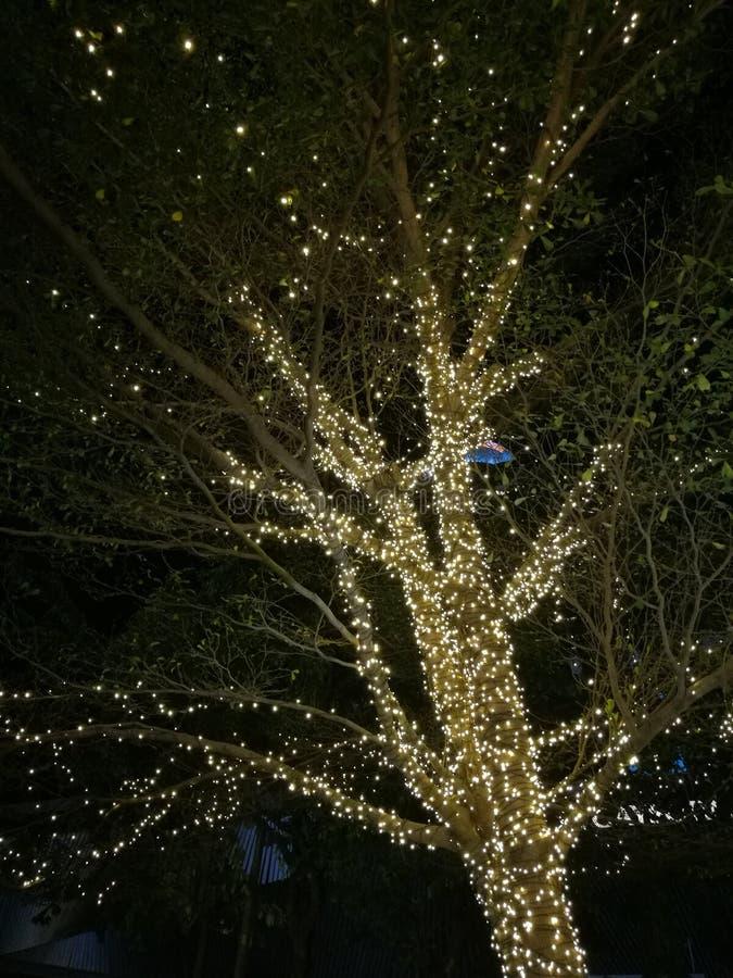 Dekorativ utomhus- radljuskula som hänger på träd i trädgården på nattetid - dekorativ bokeh för julljus, nytt år royaltyfri foto