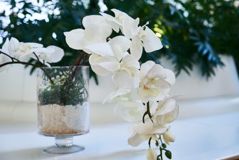 Dekorativ vit sakura blomma i en exponeringsglasvas, närbild fotografering för bildbyråer