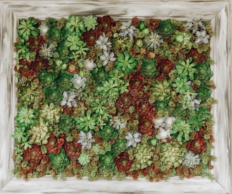 Dekorativa blommor för fyrkantig kruka utanför säsong royaltyfri bild