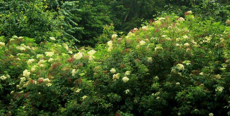 Dekorativa blommor på ottan i kodaikanal arkivbild