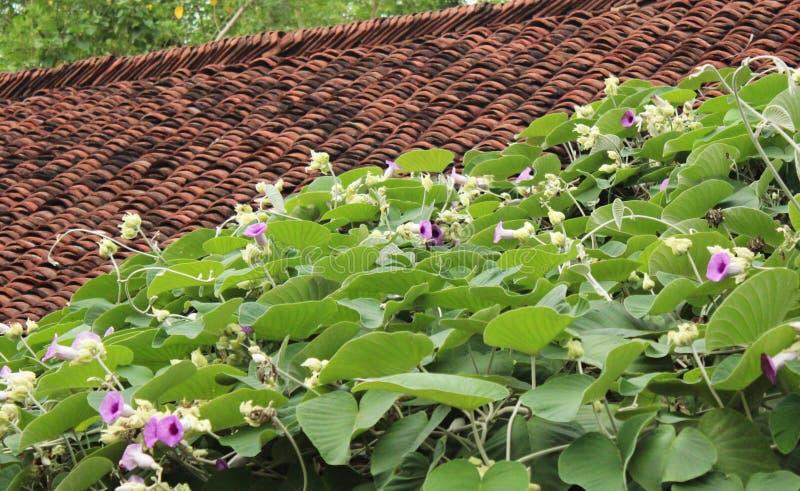 Dekorativa blommor på taket arkivbilder