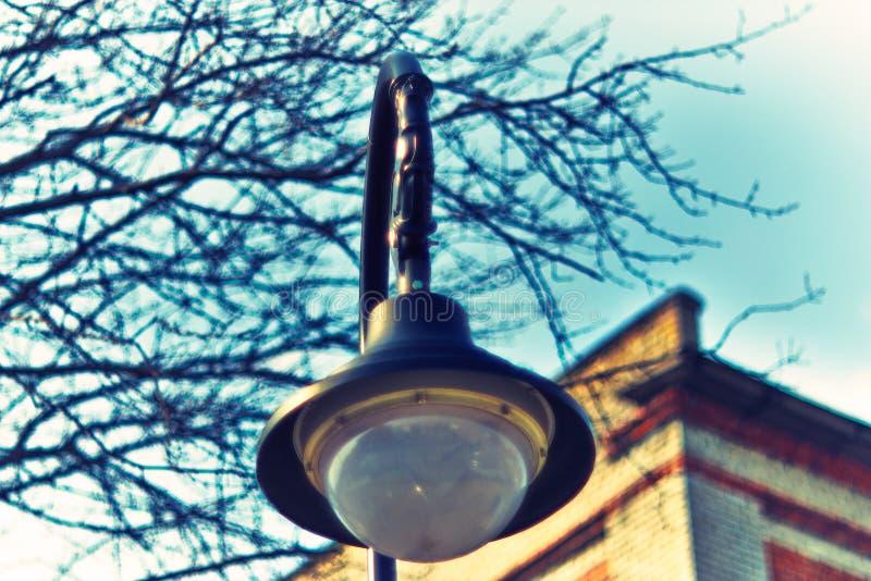 Dekorativa gataljus 018 royaltyfria foton