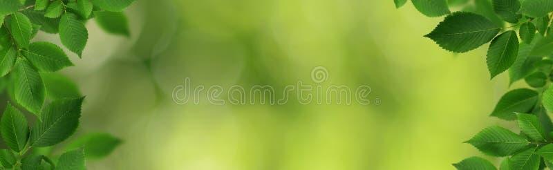 Dekorativa gränser med nya gröna alm-träd sidor arkivbilder