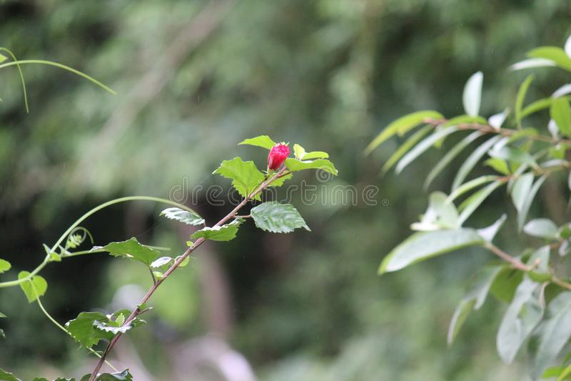 Dekorative Bäume mit rosa Blumen stockfotos