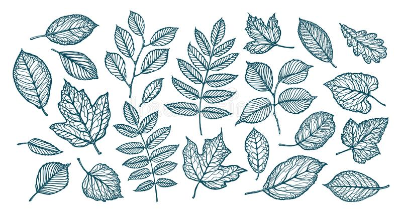 Dekorative Baumblätter Natur, Waldkonzept Set Elemente Dieses ist Datei des Formats EPS8 vektor abbildung